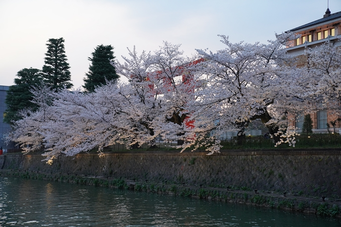 京都_桜_2020_37 岡崎疎水ライトアップ No22