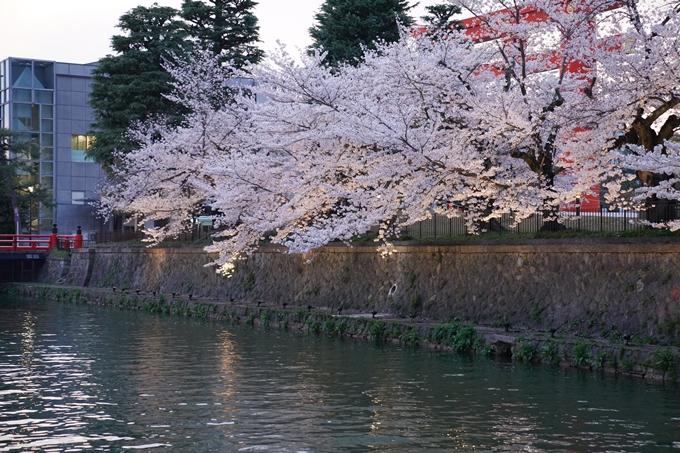 京都_桜_2020_37 岡崎疎水ライトアップ No23