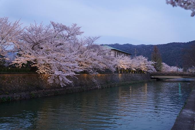 京都_桜_2020_37 岡崎疎水ライトアップ No24
