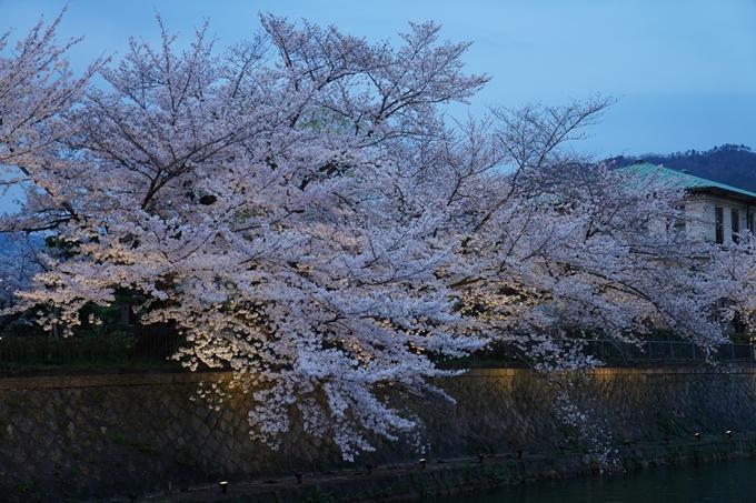 京都_桜_2020_37 岡崎疎水ライトアップ No25