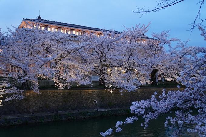 京都_桜_2020_37 岡崎疎水ライトアップ No27