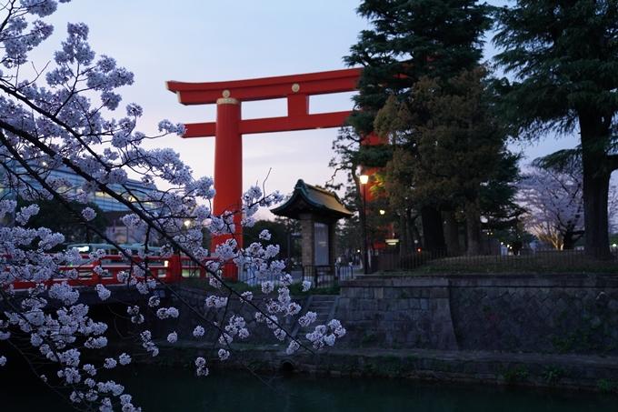 京都_桜_2020_37 岡崎疎水ライトアップ No28