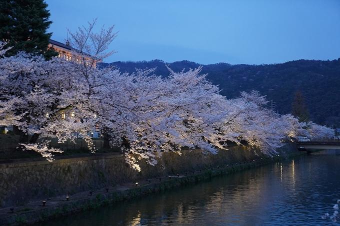 京都_桜_2020_37 岡崎疎水ライトアップ No29