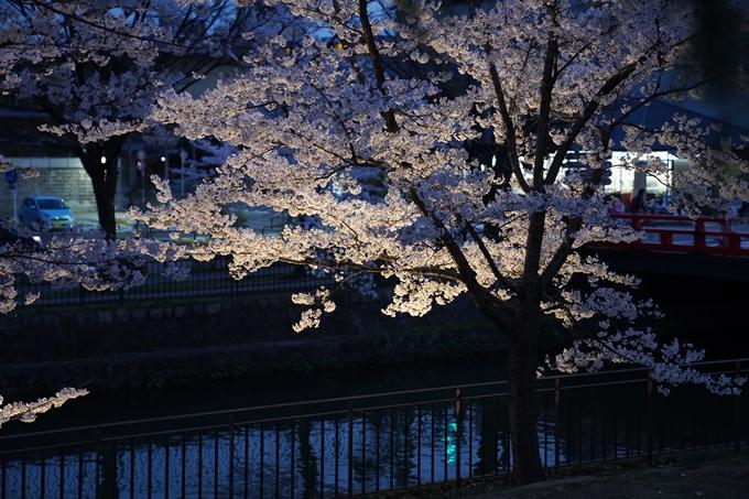 京都_桜_2020_37 岡崎疎水ライトアップ No32