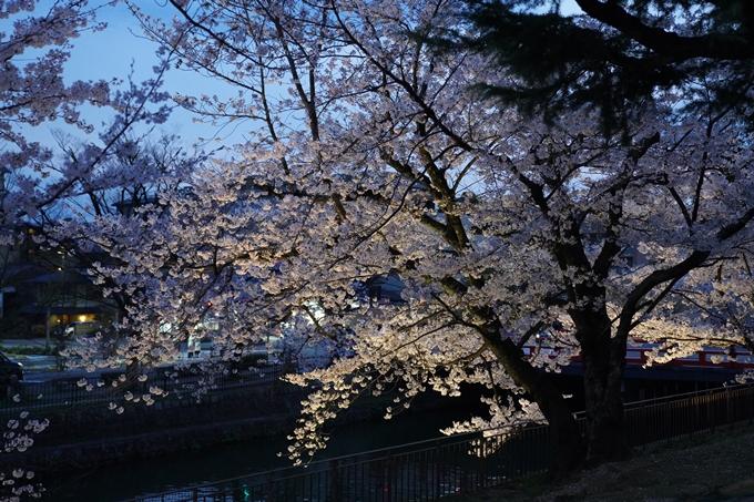 京都_桜_2020_37 岡崎疎水ライトアップ No33