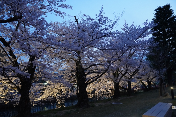 京都_桜_2020_37 岡崎疎水ライトアップ No35