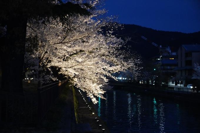 京都_桜_2020_37 岡崎疎水ライトアップ No45