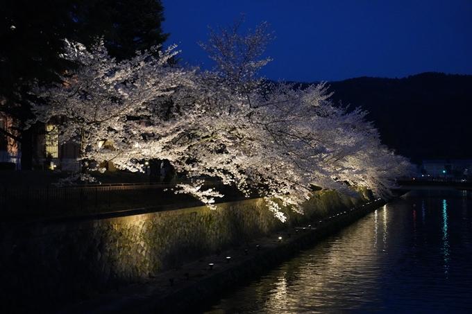京都_桜_2020_37 岡崎疎水ライトアップ No46