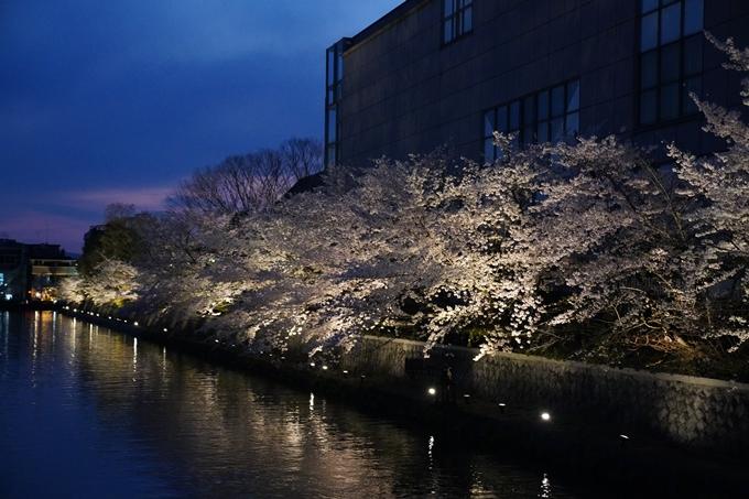 京都_桜_2020_37 岡崎疎水ライトアップ No48