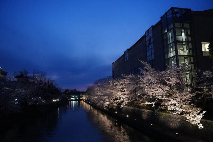 京都_桜_2020_37 岡崎疎水ライトアップ No49