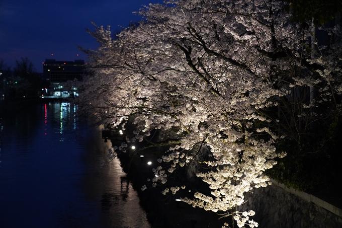 京都_桜_2020_37 岡崎疎水ライトアップ No50