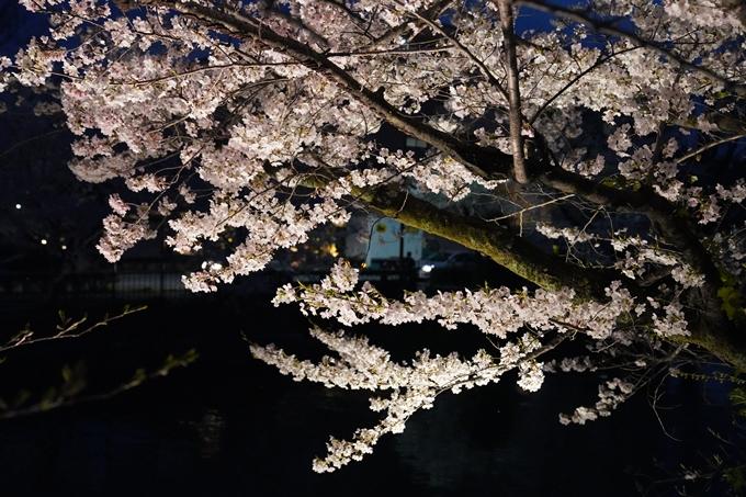 京都_桜_2020_37 岡崎疎水ライトアップ No52