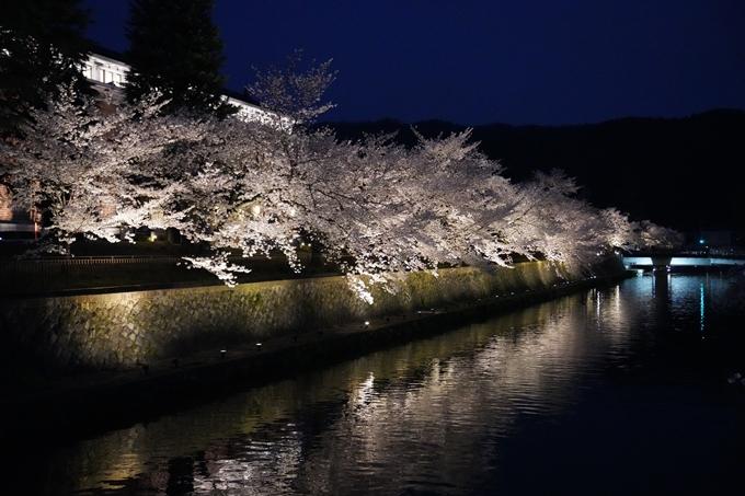 京都_桜_2020_37 岡崎疎水ライトアップ No55