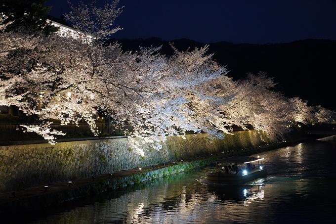 京都_桜_2020_37 岡崎疎水ライトアップ No56
