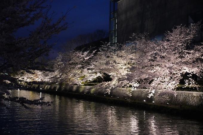 京都_桜_2020_37 岡崎疎水ライトアップ No58