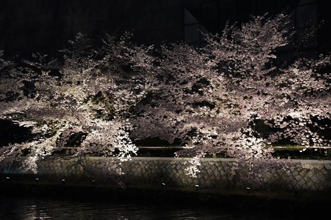 京都_桜_2020_37 岡崎疎水ライトアップ No59