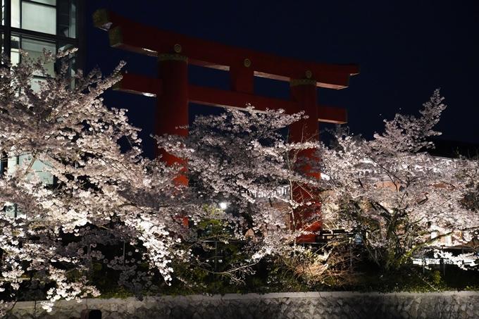 京都_桜_2020_37 岡崎疎水ライトアップ No60