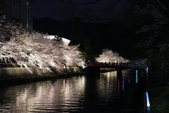 京都_桜_2020_37 岡崎疎水ライトアップ No62