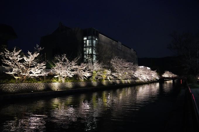 京都_桜_2020_37 岡崎疎水ライトアップ No63