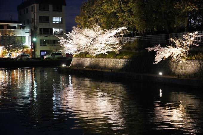 京都_桜_2020_37 岡崎疎水ライトアップ No64