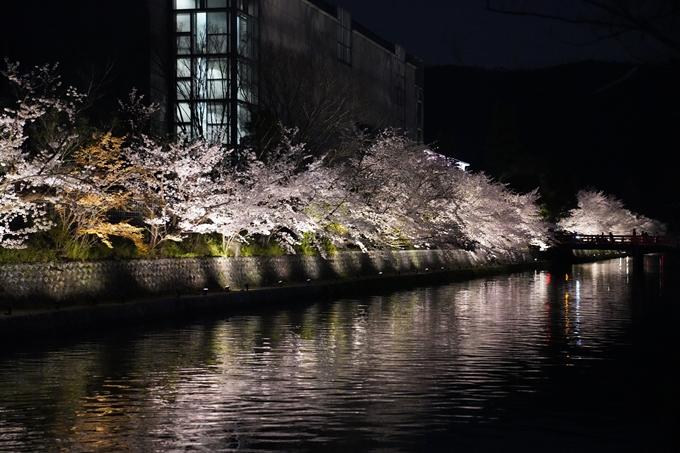 京都_桜_2020_37 岡崎疎水ライトアップ No66