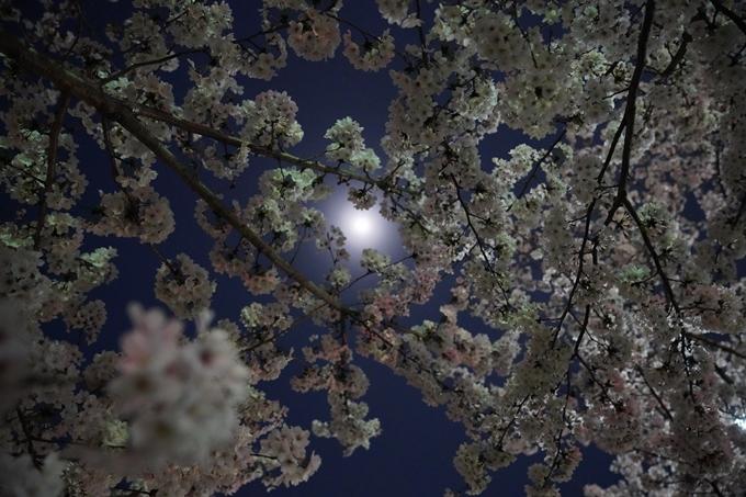 京都_桜_2020_37 岡崎疎水ライトアップ No67