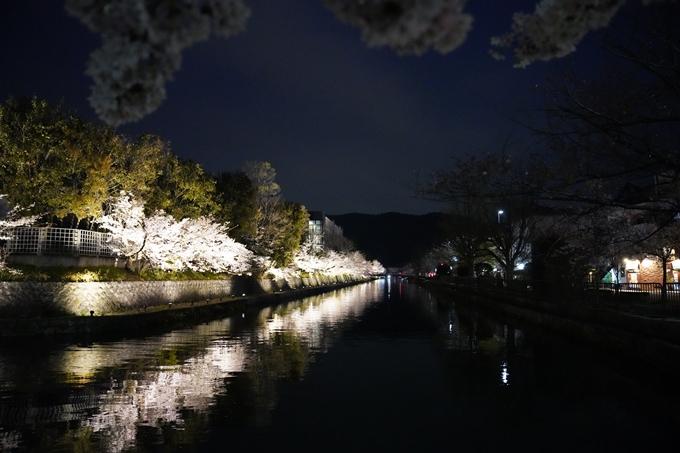 京都_桜_2020_37 岡崎疎水ライトアップ No68