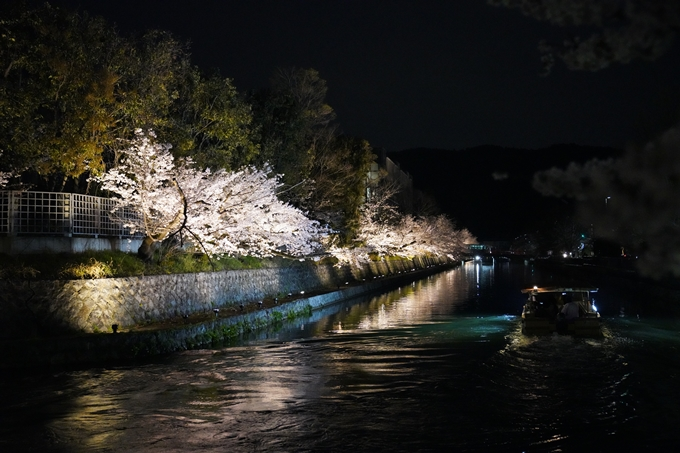 京都_桜_2020_37 岡崎疎水ライトアップ No69