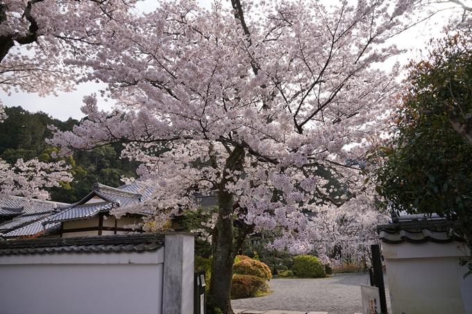 京都_桜_2020_40 毘沙門堂 No2