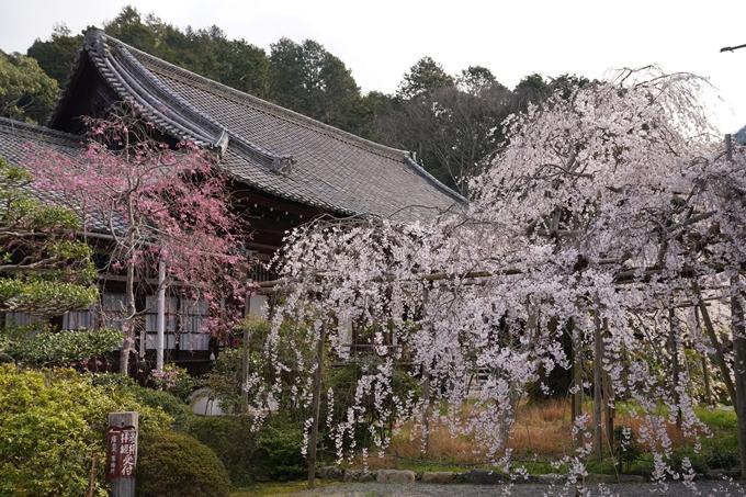 京都_桜_2020_40 毘沙門堂 No3