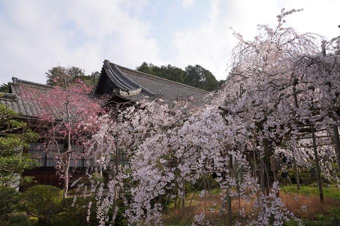 京都_桜_2020_40 毘沙門堂 No6