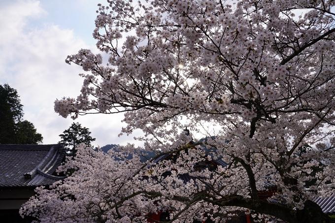 京都_桜_2020_40 毘沙門堂 No7