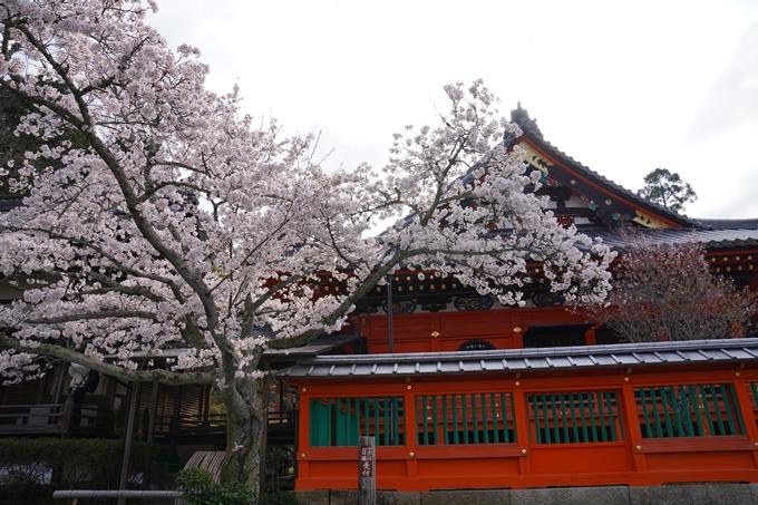 京都_桜_2020_40 毘沙門堂 No9