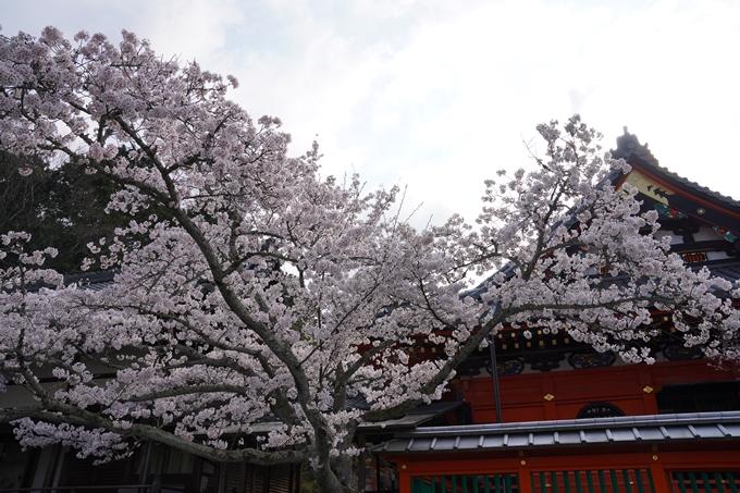 京都_桜_2020_40 毘沙門堂 No10