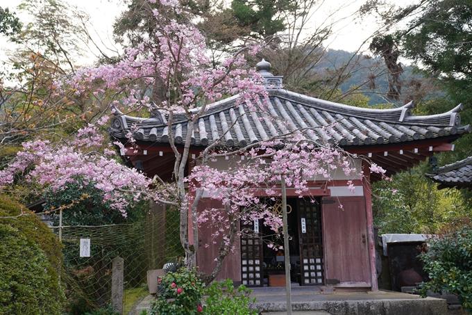 京都_桜_2020_40 毘沙門堂 No12