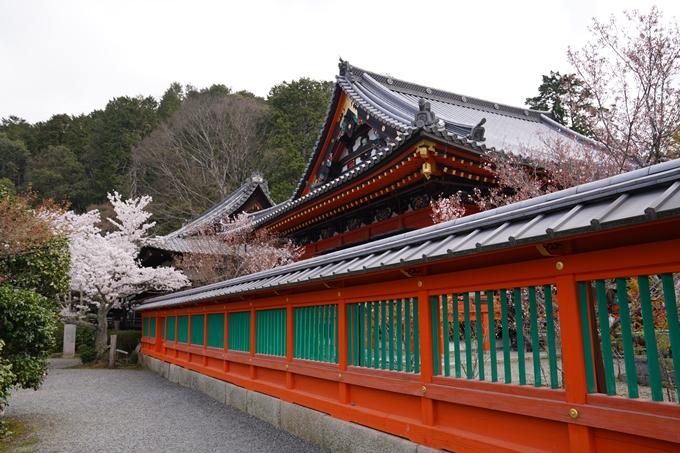 京都_桜_2020_40 毘沙門堂 No20