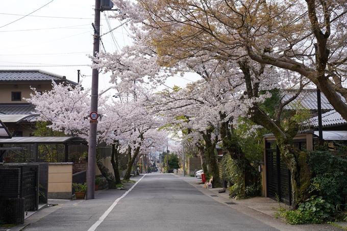 京都_桜_2020_41 No4