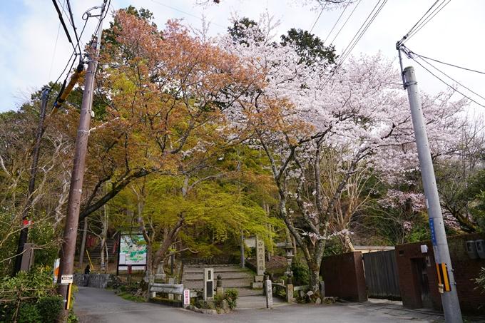 京都_桜_2020_41 No3