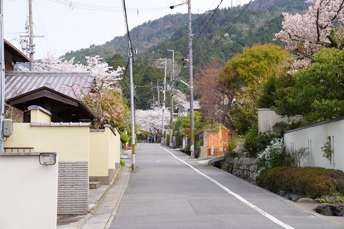 京都_桜_2020_41 No5