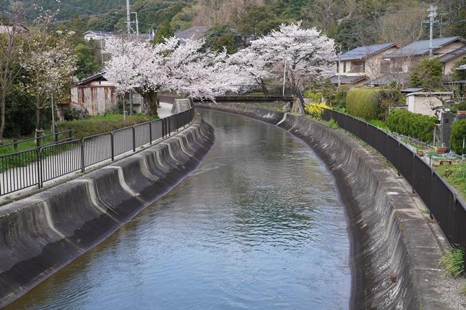 京都_桜_2020_41 No7