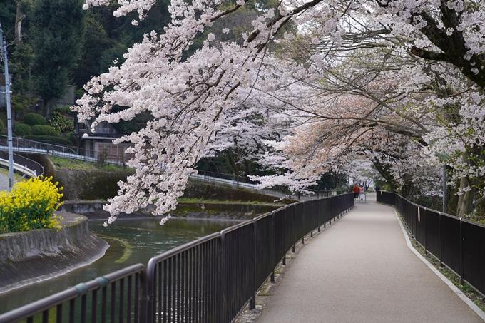 京都_桜_2020_41 No14