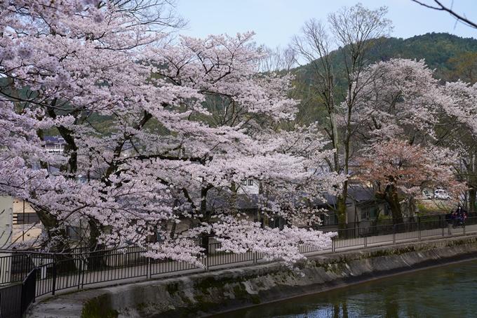 京都_桜_2020_41 No18