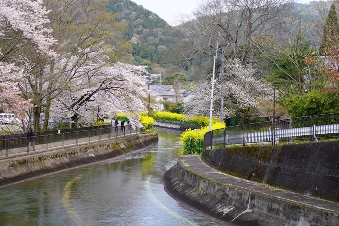 京都_桜_2020_41 No19