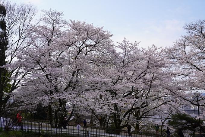京都_桜_2020_41 No20
