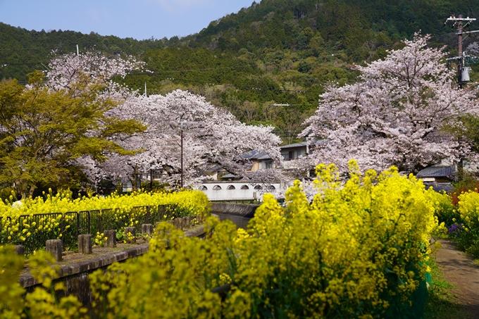 京都_桜_2020_41 No22