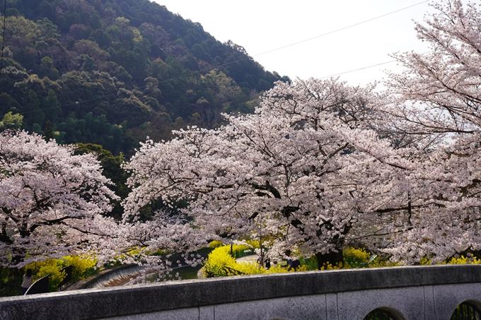 京都_桜_2020_41 No26