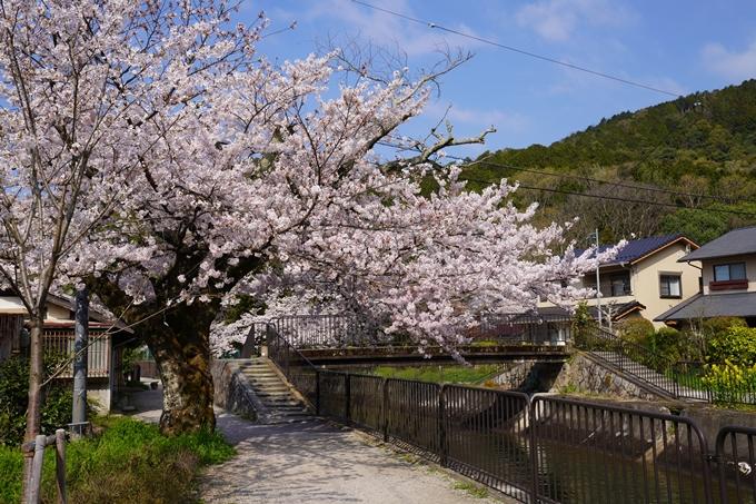 京都_桜_2020_41 No27