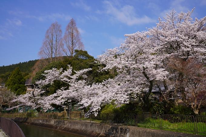 京都_桜_2020_41 No28