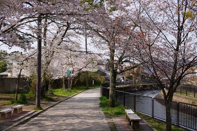 京都_桜_2020_41 No30