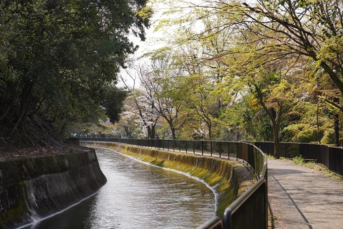 京都_桜_2020_41 No34